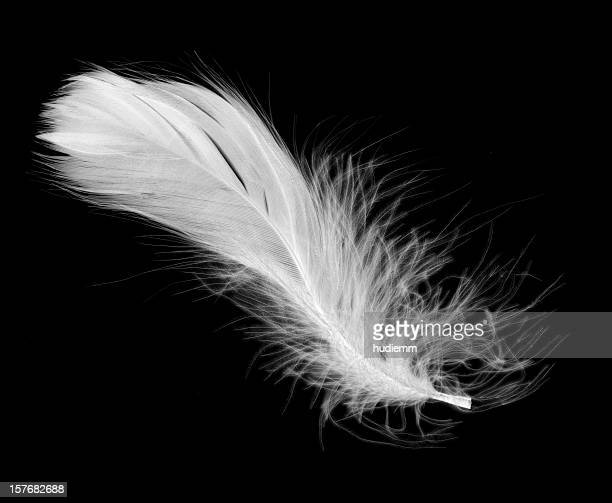 white feather isolated on a black background - feather stock pictures, royalty-free photos & images