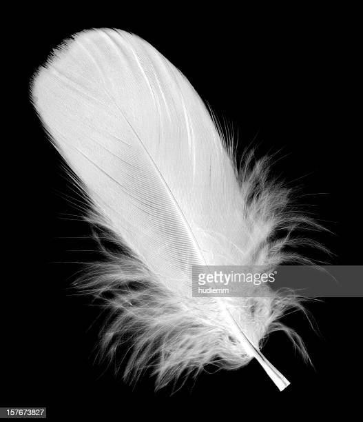 white feather isolated on black background - feather stock pictures, royalty-free photos & images
