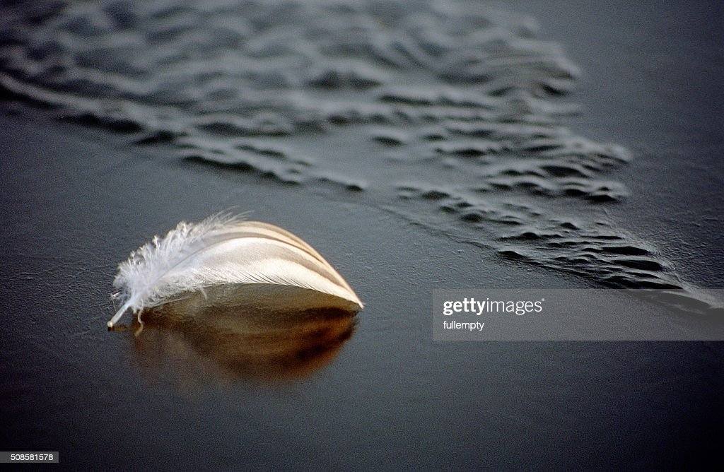 White feather on frozen blue water : Stock Photo