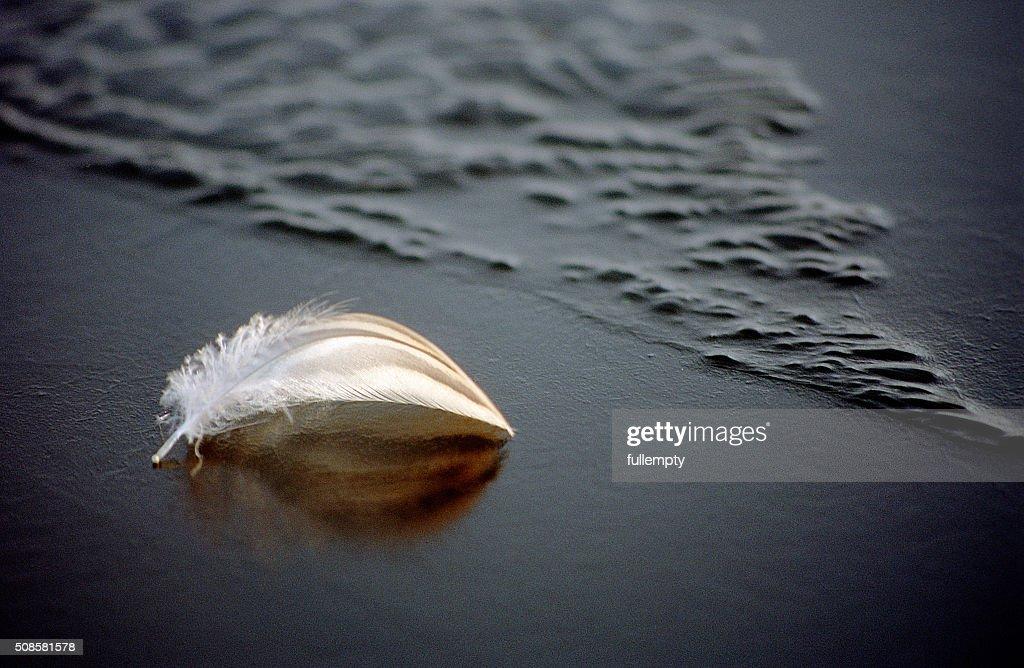 White feather on frozen blue water : Stockfoto