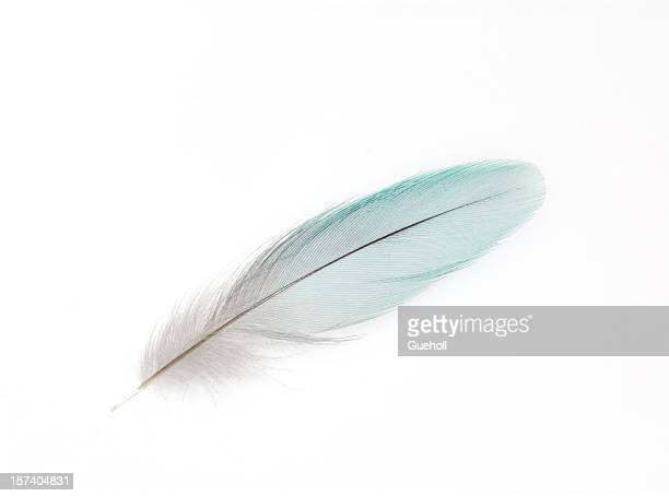 a white feather on white background - feather stock pictures, royalty-free photos & images
