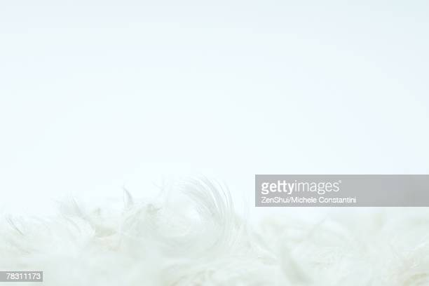 White feathers against white background