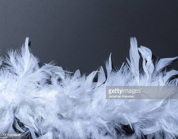 white feathers - white stock pictures, royalty-free photos & images