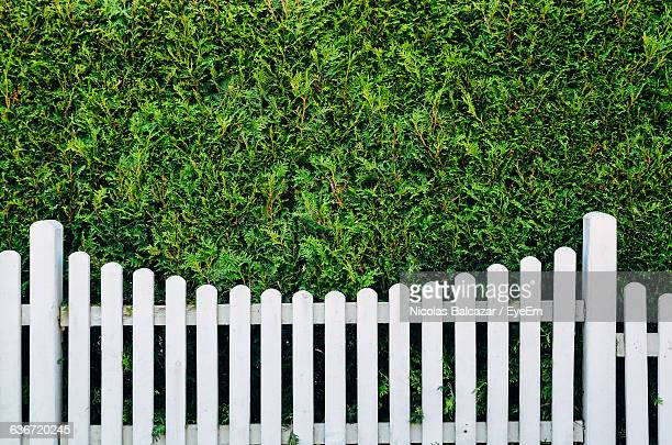 white fence against plants - fence stock pictures, royalty-free photos & images