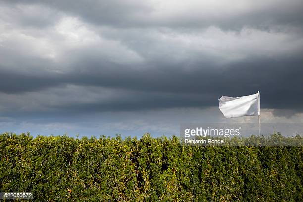 White flag flying over hedge