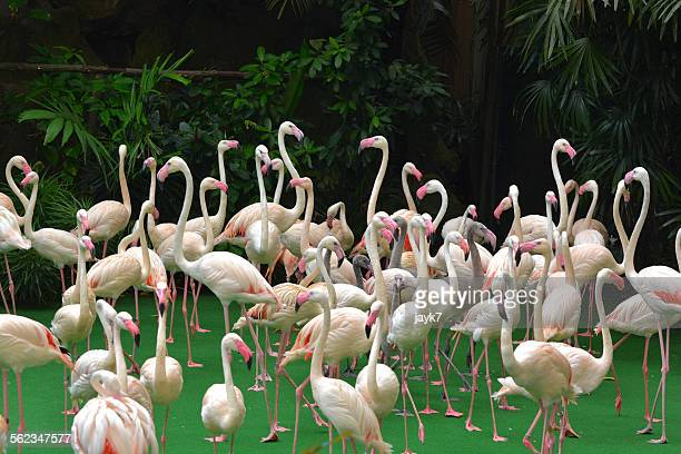 white flamingo - jurong bird park stock pictures, royalty-free photos & images
