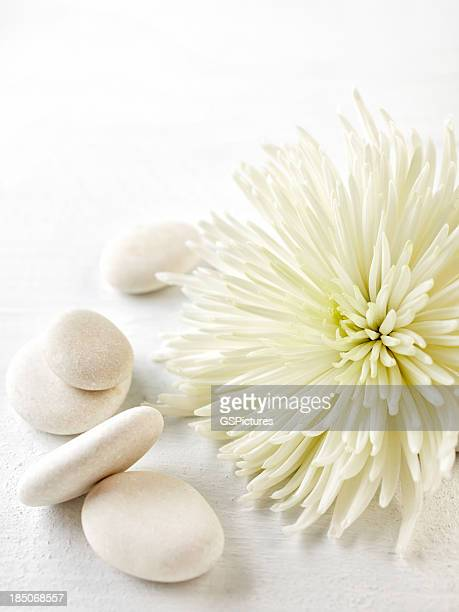 White flower and pebbles isolated