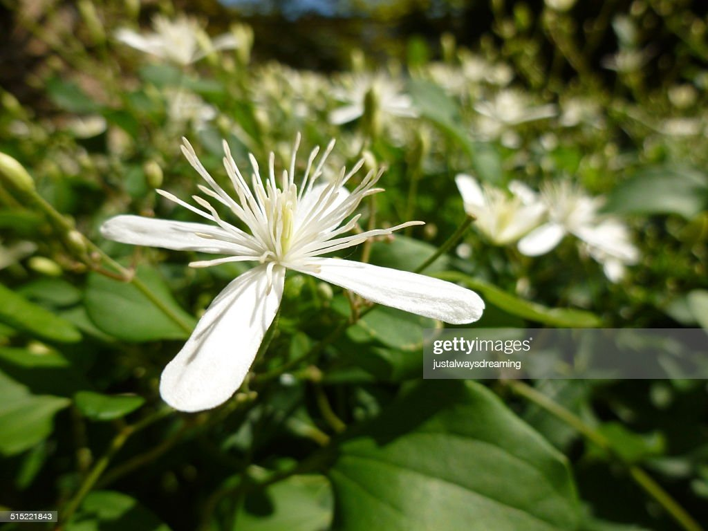 White Flower With Four Petals Stock Photo Getty Images
