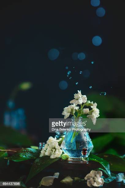 White flowers and green leaves in a glass vase with water drops