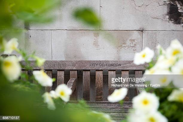 white flowers blooming against wooden bench - focus on background ストックフォトと画像