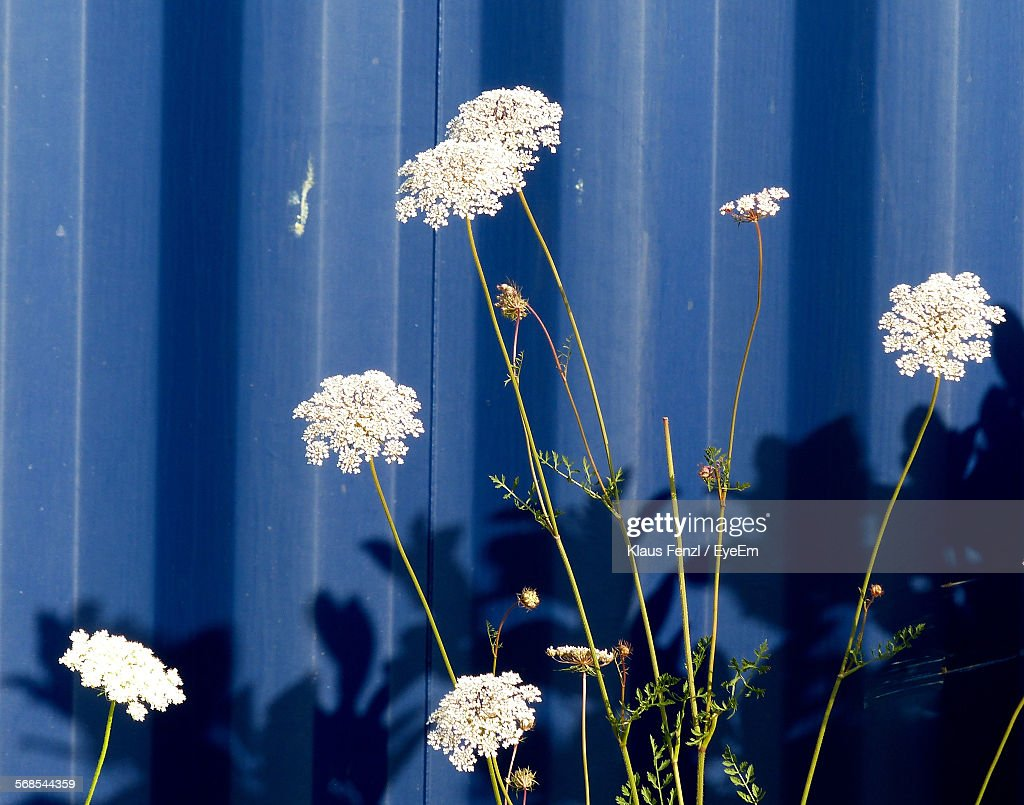 White Flowers Growing Outdoors : Stock Photo