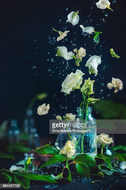 White flowers in a glass vase with water drops and flying petals