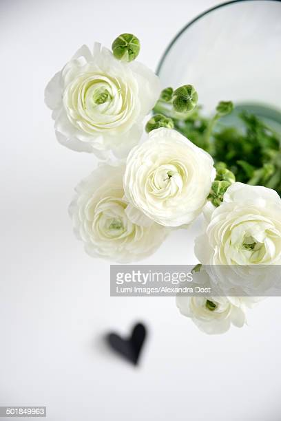 white flowers in flower vase, munich, bavaria, germany, europe - alexandra blanc photos et images de collection