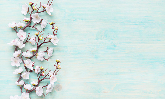 White flowers on blue wooden background 1132104595