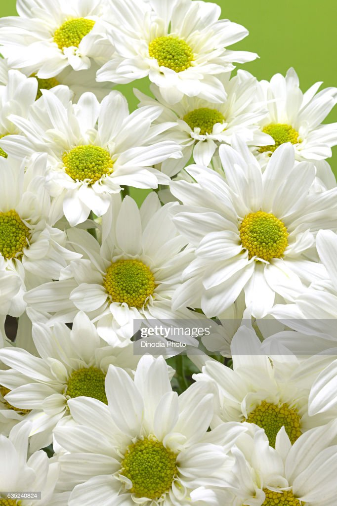 White Flowers On Green Background Stock Foto Getty Images