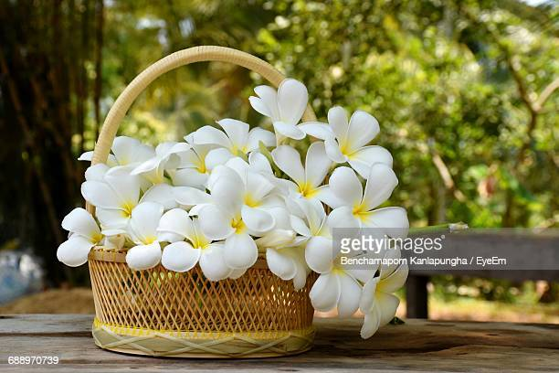 White Frangipanis In Wicker Basket On Wooden Table At Yard