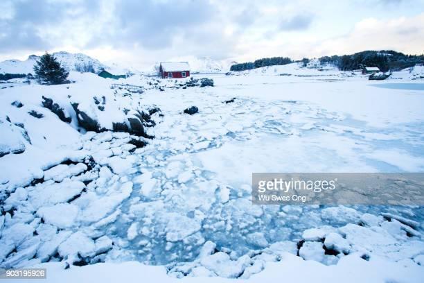 White Frozen Landscape