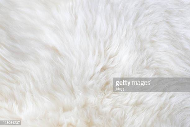 white fur - fur stock pictures, royalty-free photos & images