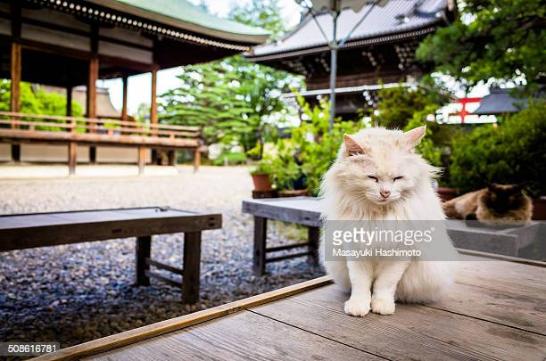 White furry cat is closing her eyes on the wooden table.