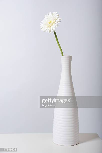 White gerbera daisy in white vase