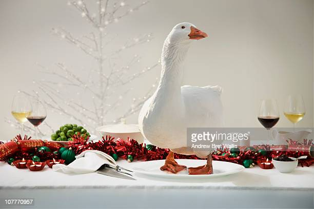 white goose on a Christmas dinner table