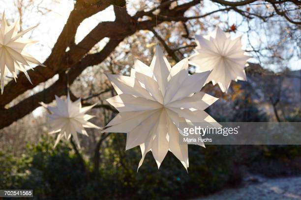 White handmade paper stars hanging from sunlit tree branches