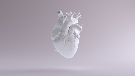 White Heart Anatomical 1075384830