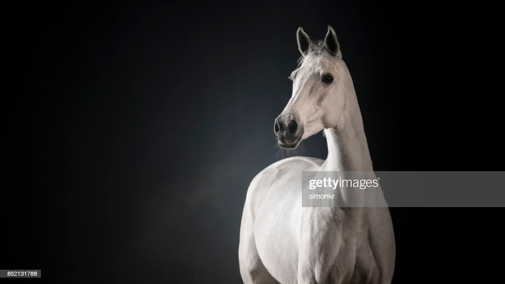White Horse Against Black Background High Res Stock Photo Getty Images