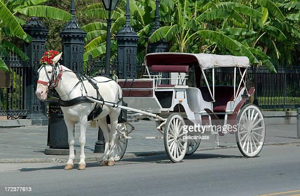 Cavalo branco e Carruagem