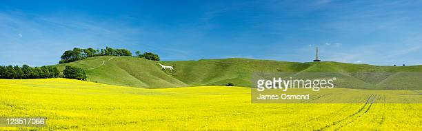 White Horse and Lansdowne Monument on Cherhill Down. Wiltshire. England. UK.
