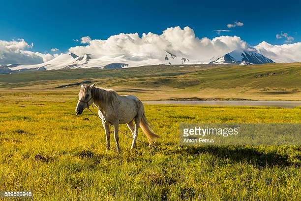 white horse at dawn near the lake - anton petrus panorama of beautiful sunrise stock pictures, royalty-free photos & images