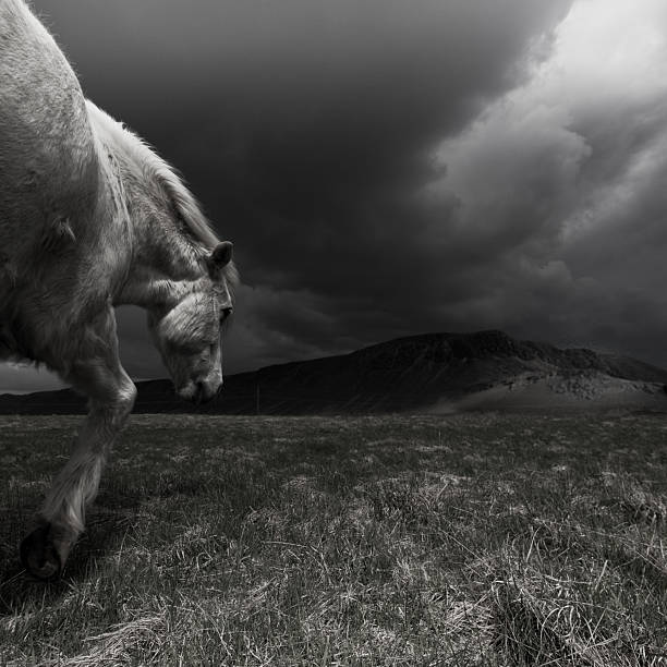 White horse at night in landscape.