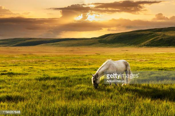 white horse at the foot of the mountains - grazing stock pictures, royalty-free photos & images