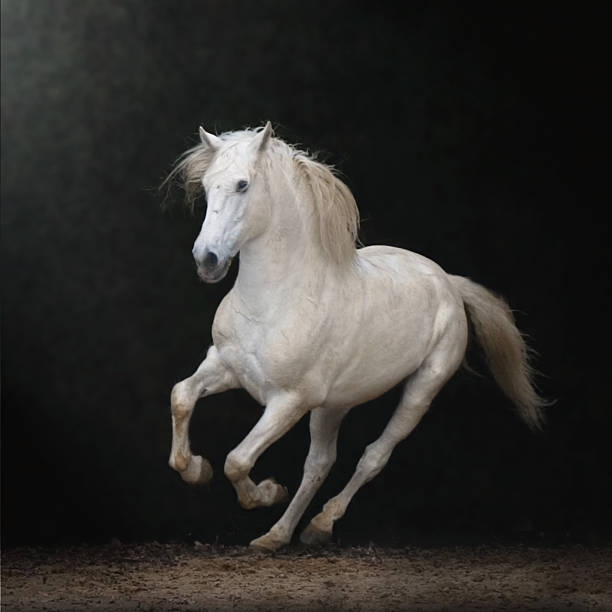 White Horse Galloping Wall Art