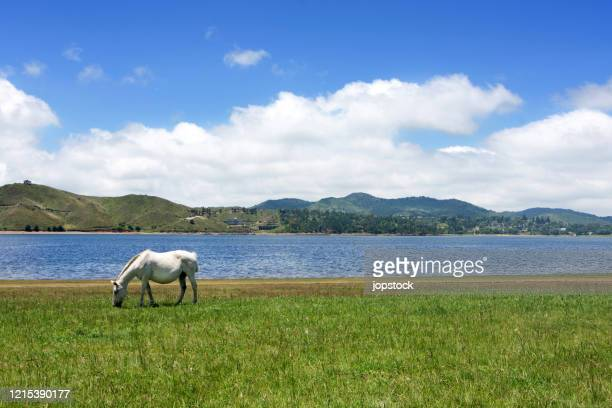 white horse grazing against beautiful lake - cordoba argentina stock pictures, royalty-free photos & images