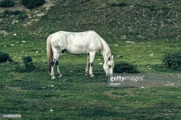 white horse in a beautifull field - cheval blanc photos et images de collection