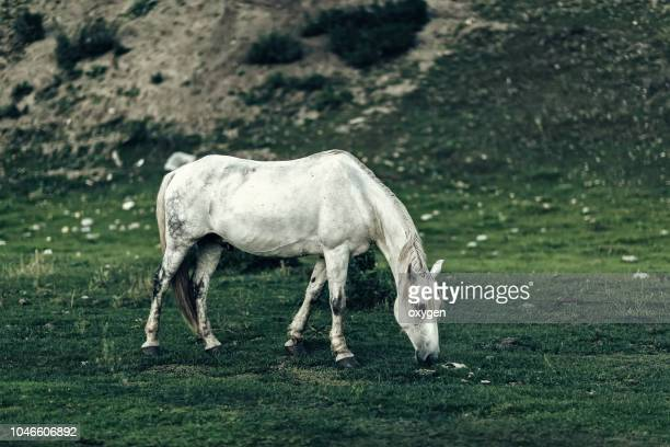 white horse in a beautifull field - アフィントン ストックフォトと画像