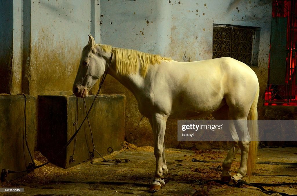 White Horse In Blue Stable Foto De Stock Getty Images