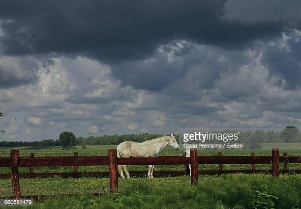 White Horse In Ranch Against Storm Clouds
