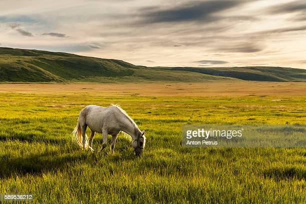white horse in the mountains - anton petrus panorama of beautiful sunrise stock pictures, royalty-free photos & images