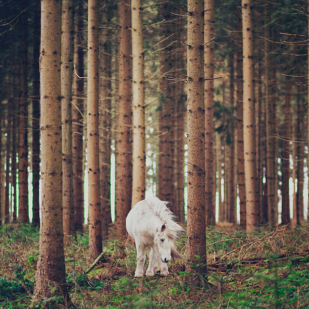 White horse in the wood