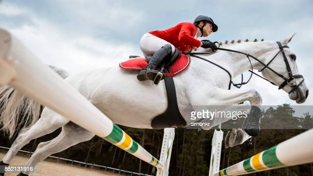 white horse jumping an oxer with his rider - equestrian show jumping stock pictures, royalty-free photos & images