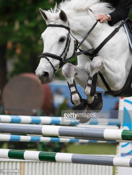 White horse jumping over a hurdle at a show