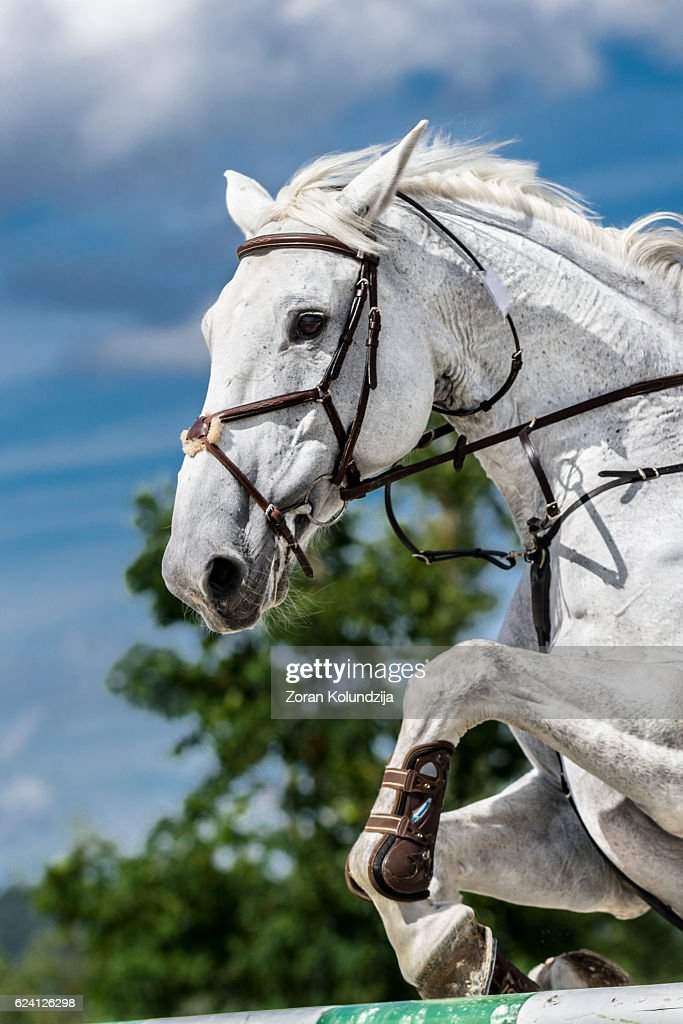 White Horse Jumping Over Hurdle Foto De Stock Getty Images