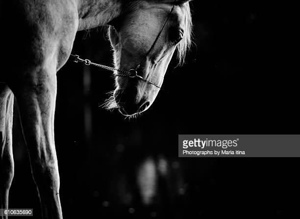 White horse on a black&white shot