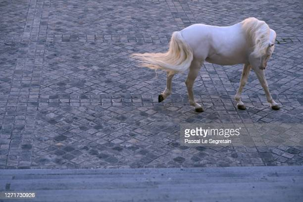 """White horse performs for the """"Il Medico Della Peste"""" 2020/2021 Winter Franck Sorbier Haute Couture Maitre collection at the Conservatoire national..."""