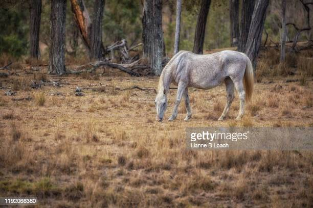white horse - lianne loach stock pictures, royalty-free photos & images