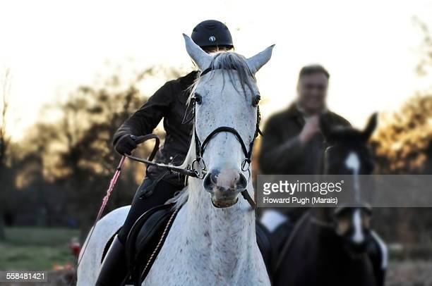white horse - howard pugh stock pictures, royalty-free photos & images