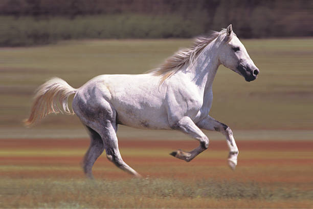 White Horse Running In Field Wall Art
