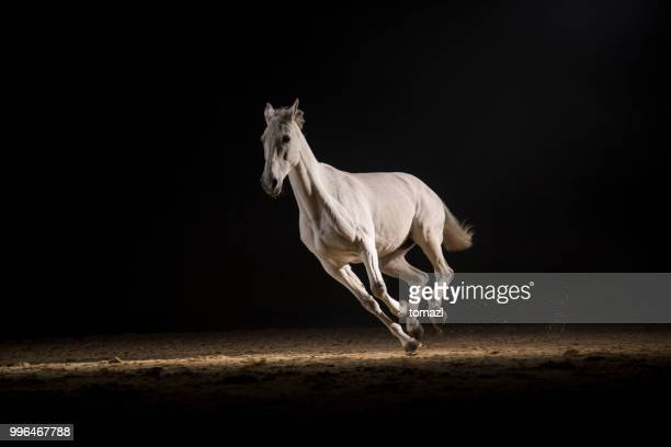 white horse running - horse stock pictures, royalty-free photos & images